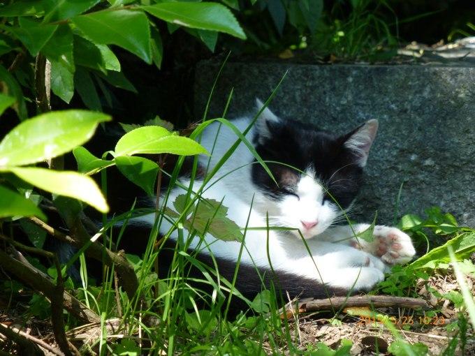 和布刈黒白猫その1