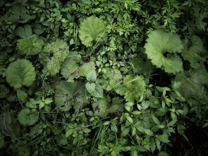 Vegetation Near mojimonjihome
